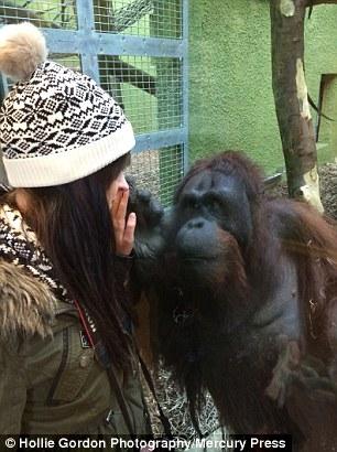 疯狂动物园猩猩图鉴
